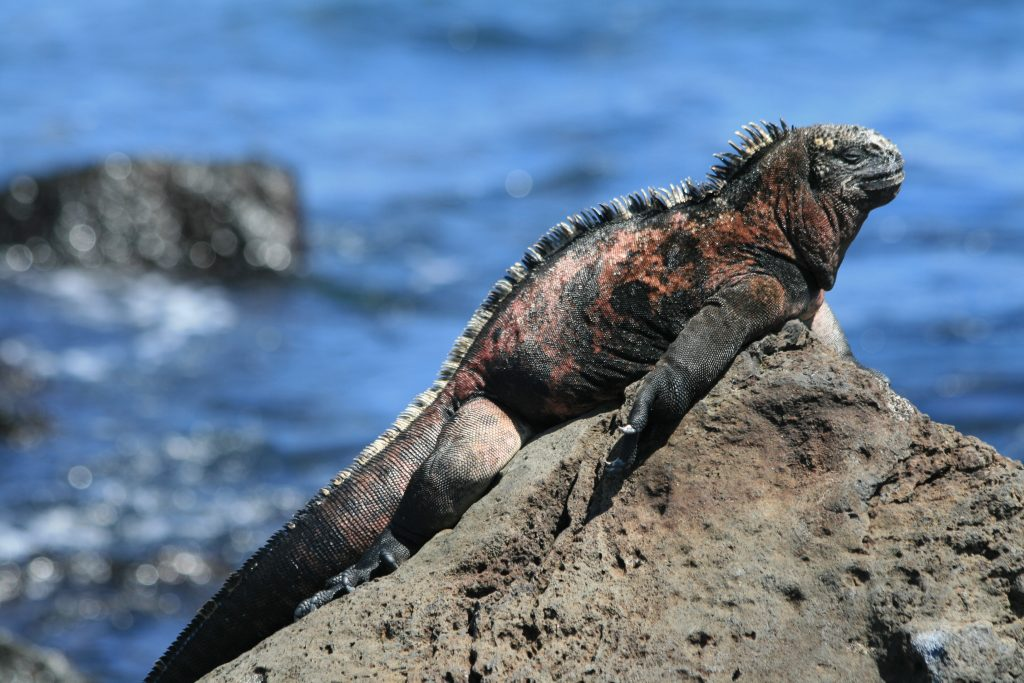 Las iguanas animales mas bonitos y exóticos tipos y características cuidados en paralasiguanas.top