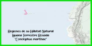"""Iguana Terrestre Rosada """"Conolophus marthae"""" exótico y bonito"""