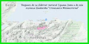 "Iguana Jamo o de cola espinosa Hondureña ""Ctenosaura Melanosterna"" regiones de su hábitat natural reptil exótico info tienda online paralasiguanas.top"