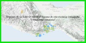 "Iguana de cola espinosa Oaxaqueña ""Ctenosaura Oaxacana"" regiones de su hábitat natural info tienda online paralasiguanas.top"