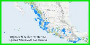"Iguana Mexicana de cola espinosa ""Ctenosaura Pectinata"" regiones de su hábitat natural reptil exótico info tienda online paralasiguanas.top"