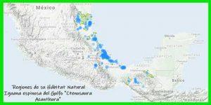 Iguana espinosa del Golfo Ctenosaura Acanthura o iguana negra ubicación geográfica info tienda online paralasiguanas.top
