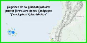 """Iguana Terrestre de las Galápagos """"Conolophus Subcristatus"""" exótica y bonita"""