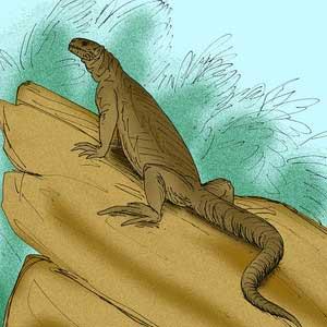 Iguana crestada de Fiji Iguana Brachylophus Gibbonsi información tienda online paralasiguanas.top