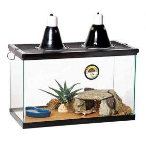 Peceras para iguanas reptiles exóticos y bonitos