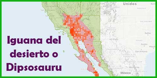 iguana del desierto - habitat natural