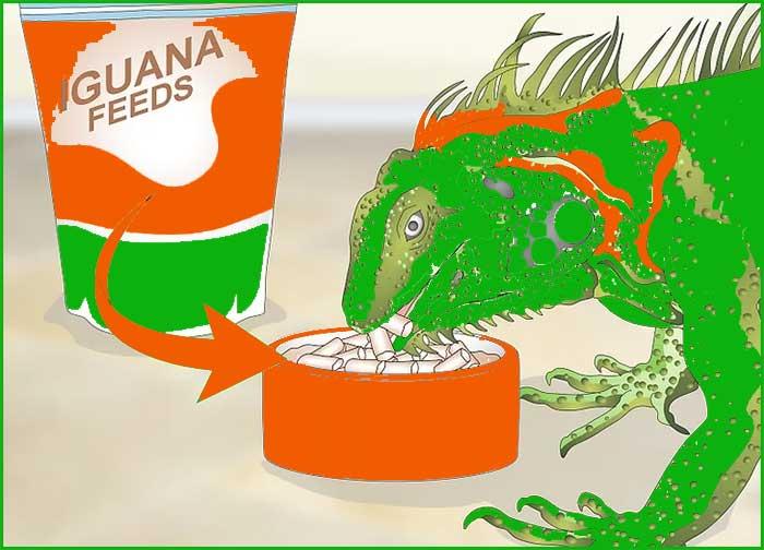 3 Alimentando sabroso a tu Iguana 2