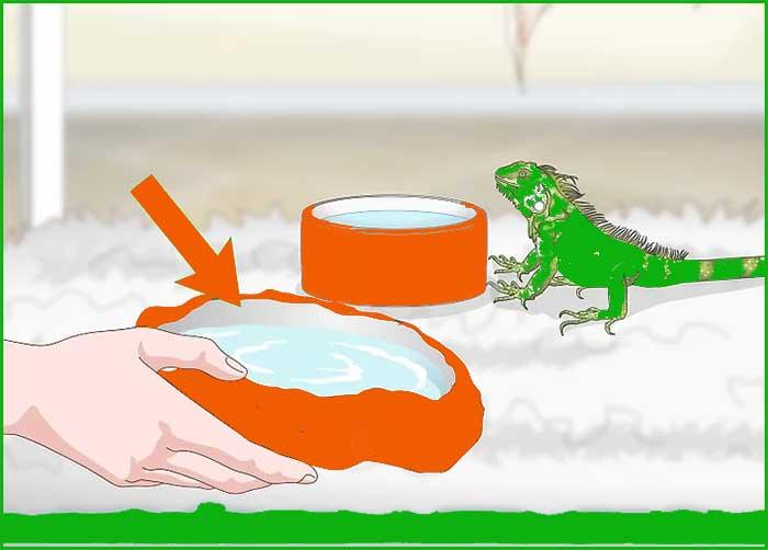 3 Alimentando sabroso a tu Iguana 5