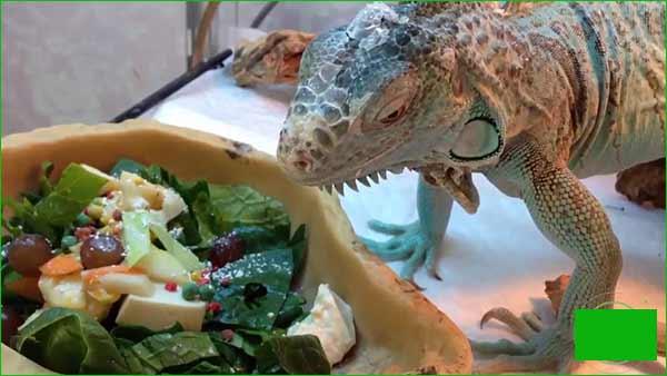 Alimentos para alimentar su iguana 2-3 días a la semana (añadir algunos a los alimentos básicos)
