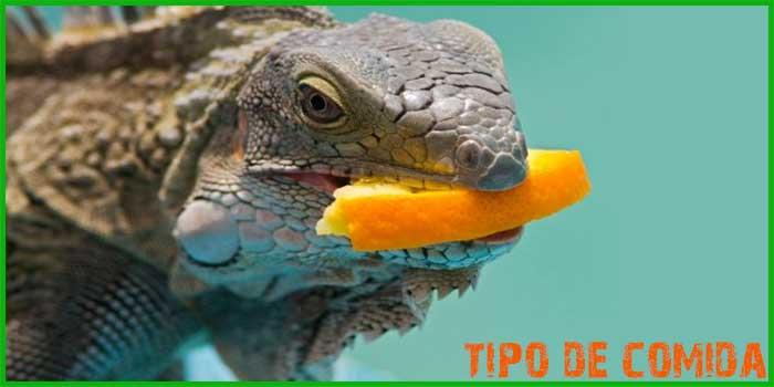 El patrón de alimentación de las iguanas