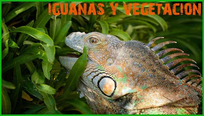 Enseñar a su Iguana Cómo beber agua