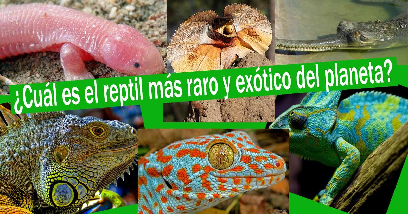 Los 6 reptiles más exóticos, raros y bellos (Quien ocupa la posición #1)