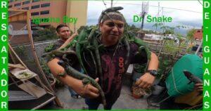 Iguana boy, el rescatador ya tiene 38 iguanas