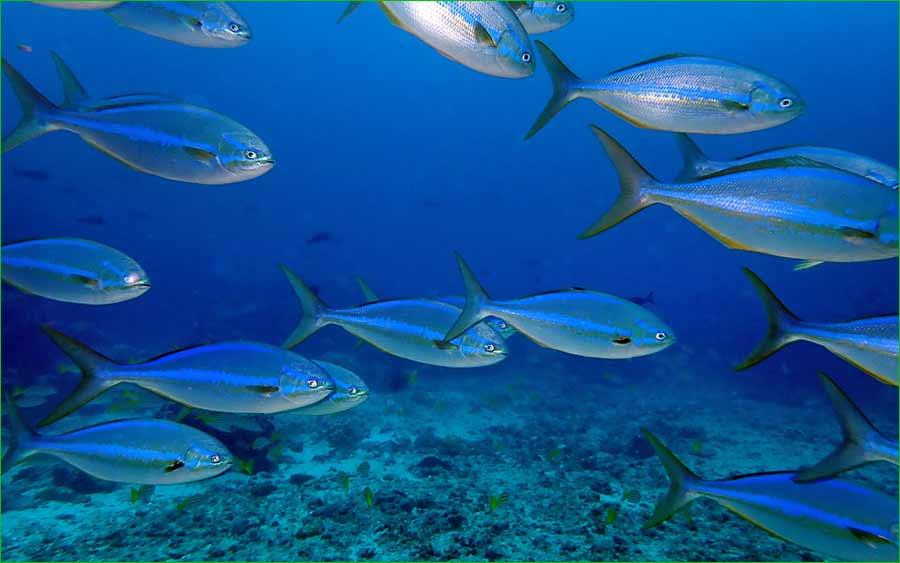 La iguana y otras especies de animales de Islas Galápagos se sienten libres de nuevo - arrecife la arena de los peces corredores arcoiris