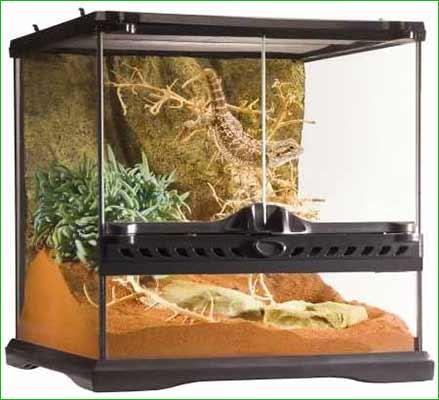 Terrario para iguana -mediano - Exo Terra PT2600 Glass Terrarium