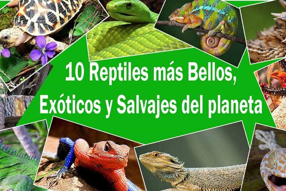 """Los 10 Reptiles más Bellos, Exóticos y Salvajes """"Cuál podría ser tú mascota"""""""